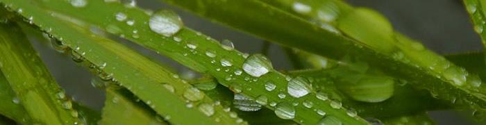 raindrops.jpg - 23.13 kB