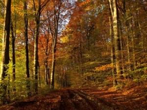 poland-road-in-autumn.jpg - 35.95 kB